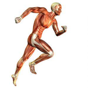 El cuerpo del corredor está totalmente conectado
