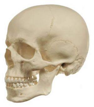 El cráneo tiene la clave de muchas lesiones del corredor