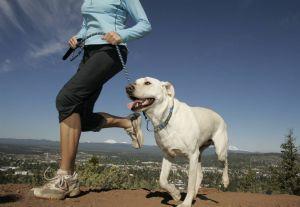 Cada vez hay más dueños de perros que corren y lo hacen con sus mascotas