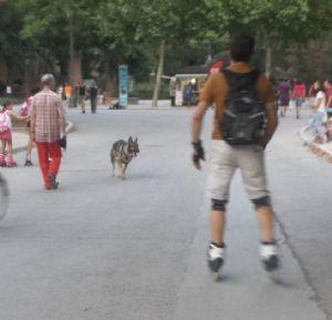 A veces podemos encontrarnos con perros sueltos y sin controlar en los parques