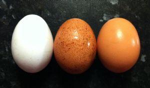 Los huevos contienen altos niveles de proteínas y muchas vitaminas