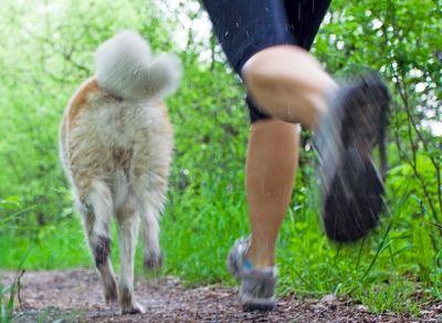 Es habitual cruzarse con perros en los parques por los que corremos