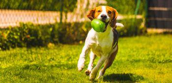 Los perros sueltos pueden suponer un peligro para los corredores